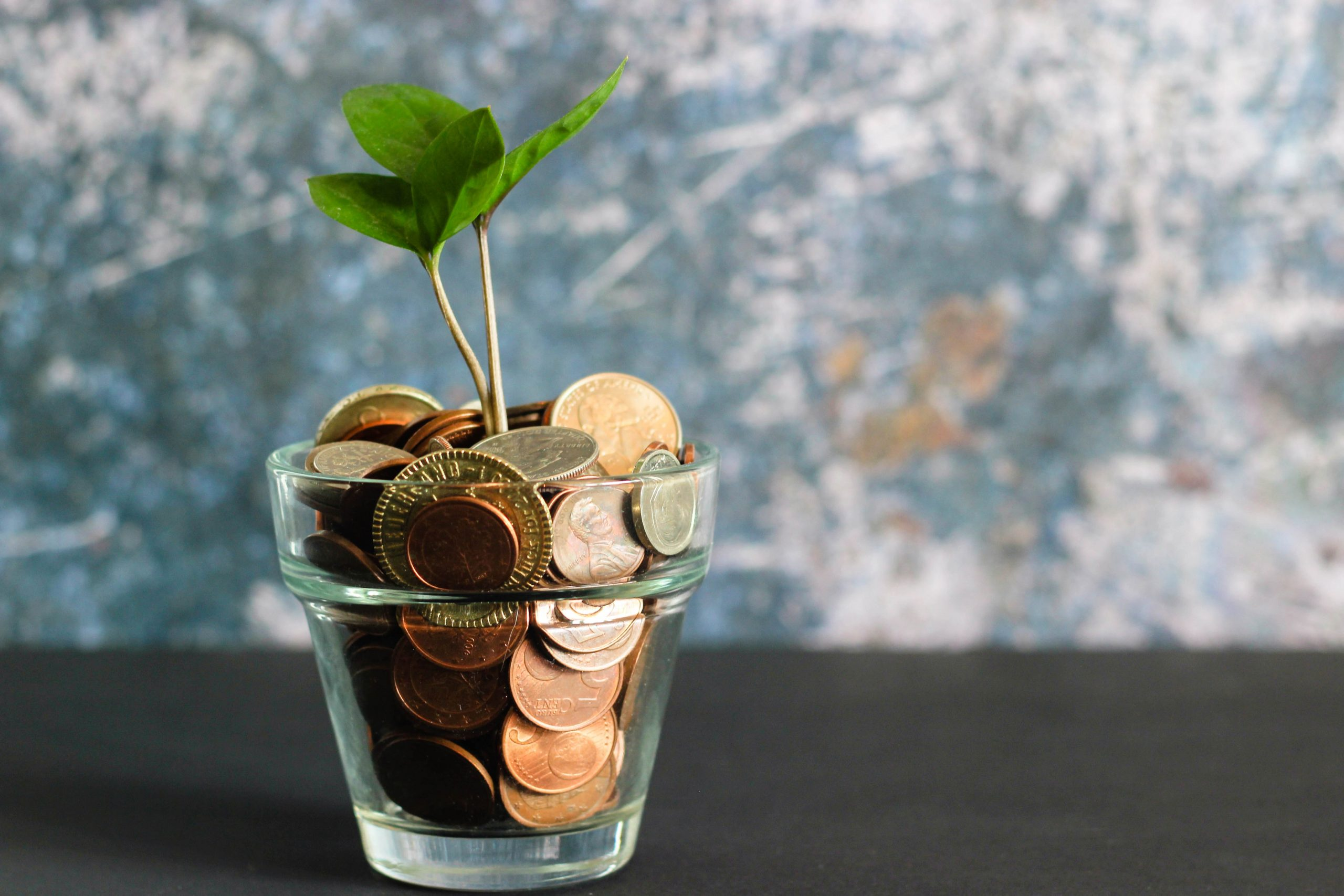 Glass flower pot filled with coins and a little sprout coming through the top